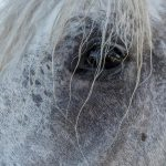 Equine Photos of France