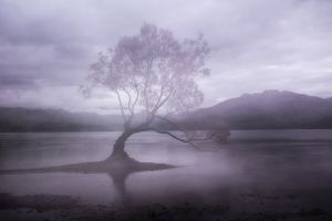 Wanaka Willow 2.jpg