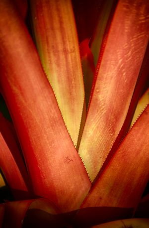Red stalk web-c38.jpg